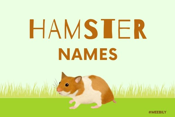 Hamster Name Ideas